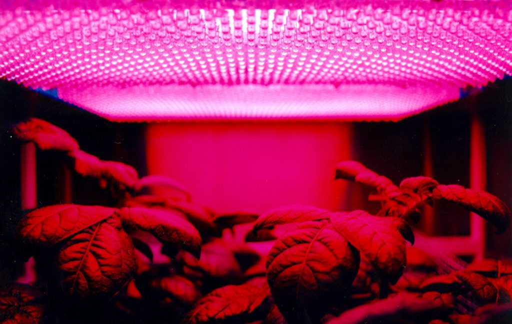 can you leave grow lights on 24 hours a day