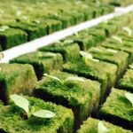 how to use rockwool for hydroponics