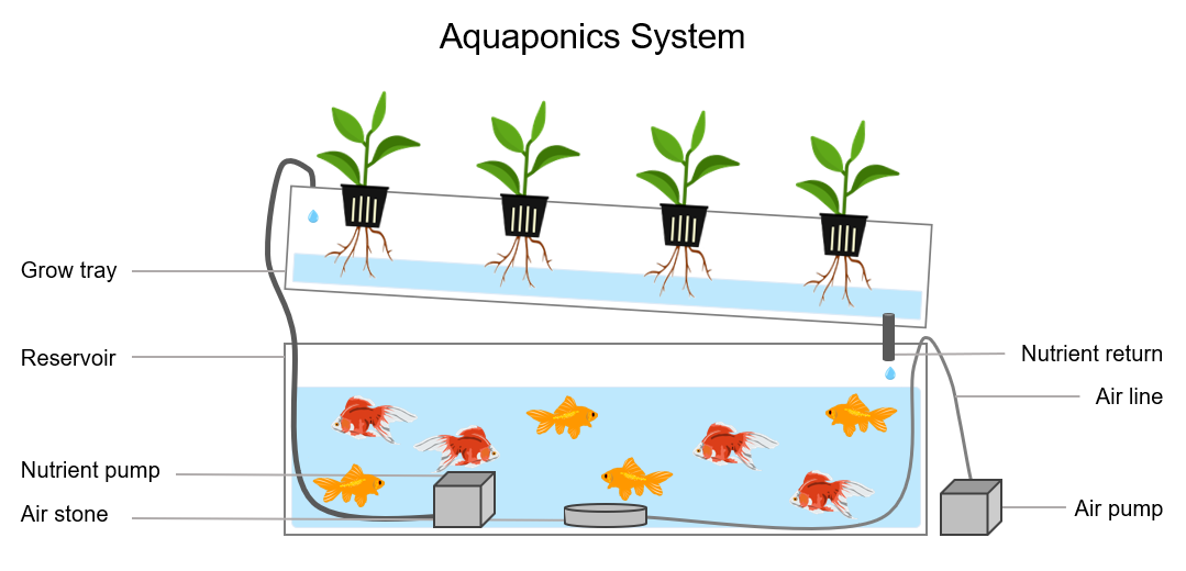 aquaponics system diagram