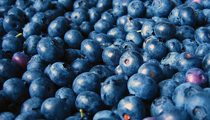 how to grow hydroponic blueberries
