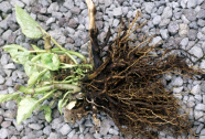 How to Fix Root Rot and Grow Better Plants [Step-by-Step Guide]